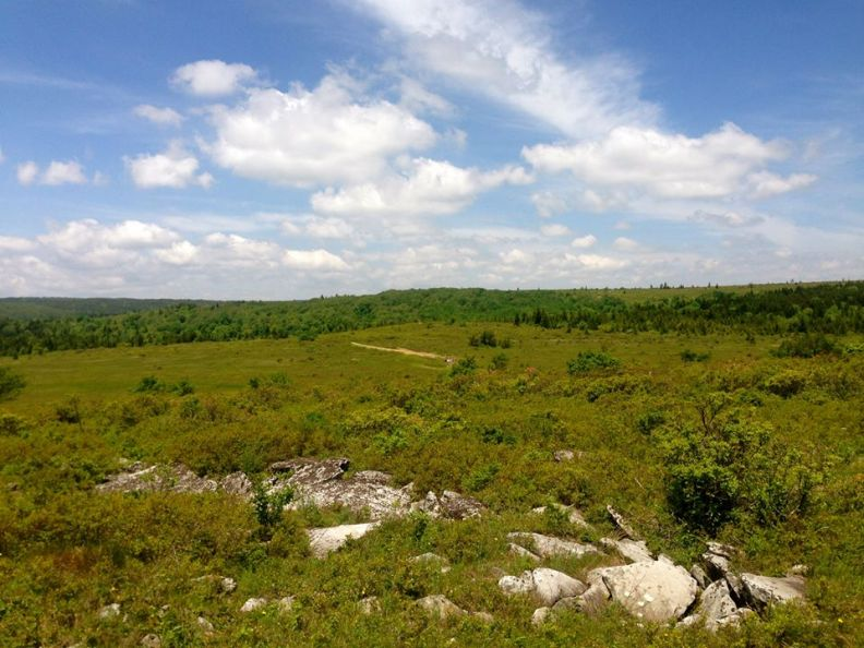 Highlands in Dolly Sods Wilderness
