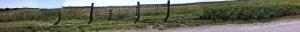 spotty fence